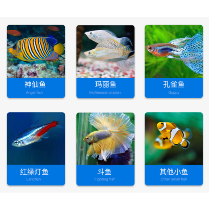 اقراص لاصقة طعام اسماك الزينة الغني بالفيتامينات